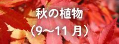春の植物(9〜11月)