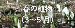 春の植物(3〜5月)