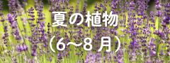 春の植物(6〜8月)