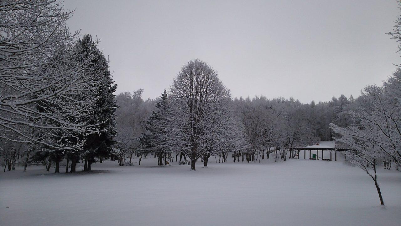 ピクニック広場の菩提樹冬