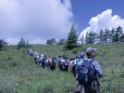 白樺湖と車山周辺の植物観察会(定員に達しました)