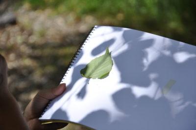 〈葉っぱのミニ図鑑をつくろう〉